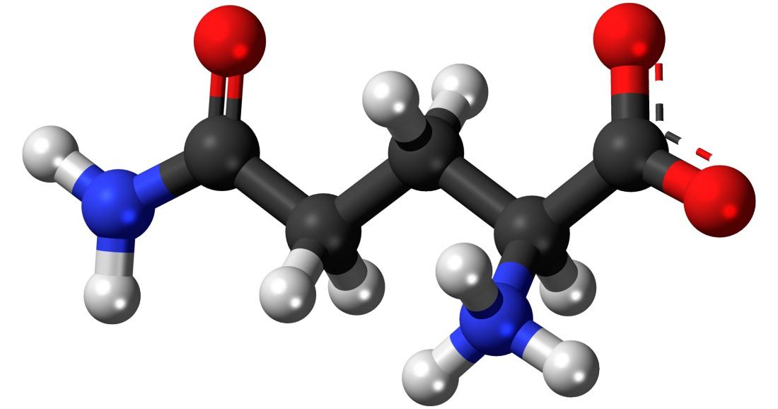 Los aminoácidos, la proteína indispensable para el cuerpo